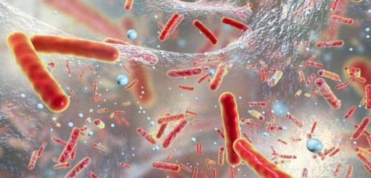 Antivitamine als neue Antibiotika? – Naturheilkunde & Naturheilverfahren Fachportal