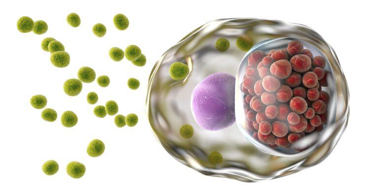 Geschlechtskrankheiten: So vermehren sich Chlamydien – Naturheilkunde & Naturheilverfahren Fachportal