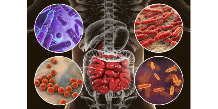 Immunsystem: Darmbakterien beeinflussen Antikörper-Produktion – Naturheilkunde & Naturheilverfahren Fachportal