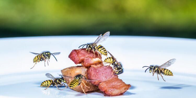 Wespen abwehren: Verhaltenstipps und Abwehrmethoden – Naturheilkunde & Naturheilverfahren Fachportal