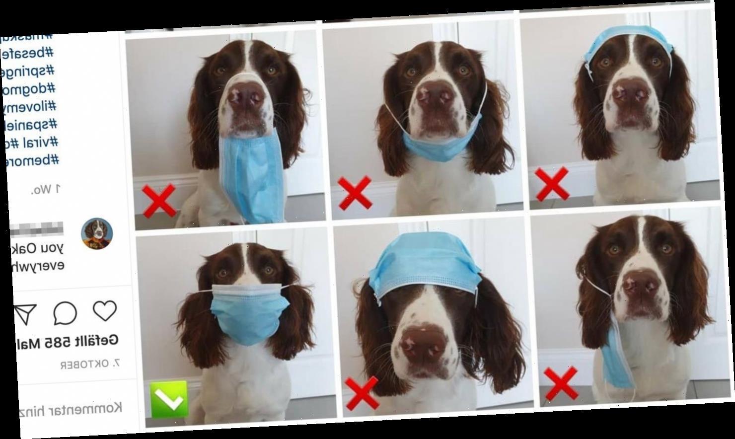 Wenn ein Hund eine Maske richtig tragen kann, könnt ihr das auch