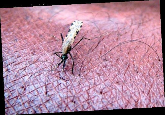 Wegen der Corona-Pandemie: WHOerwartet Tausende zusätzliche Malaria-Tote