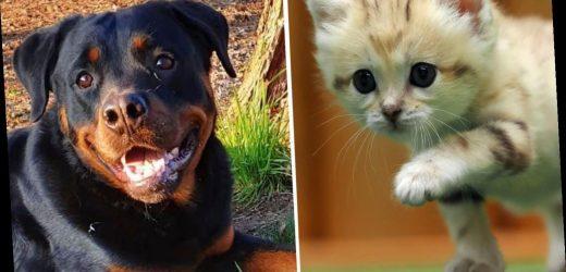 Infizierte Haustiere: Sollten man Vierbeiner gegen Corona impfen lassen?